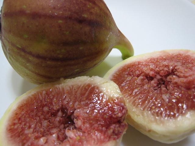 夏・秋の収穫体験スタート!イチジク&レモン