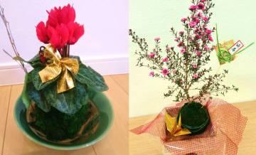 【12月】苔玉作り講座開催
