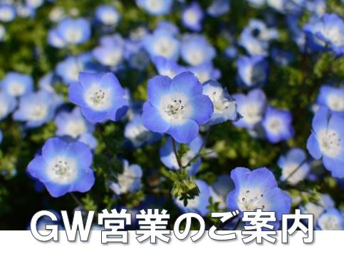 ゴールデンウィーク営業案内(4/30のみ休園)